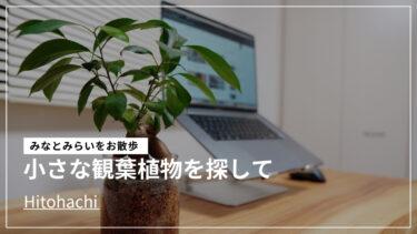 【ヒトハチ】ガジュマルを購入!観葉植物の癒し効果と購入方法を紹介