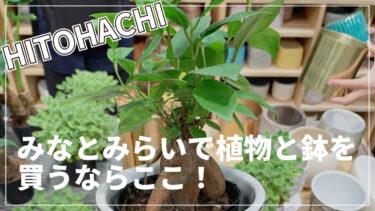 【ヒトハチ】みなとみらいで植物と鉢を見つかるお店はここ!